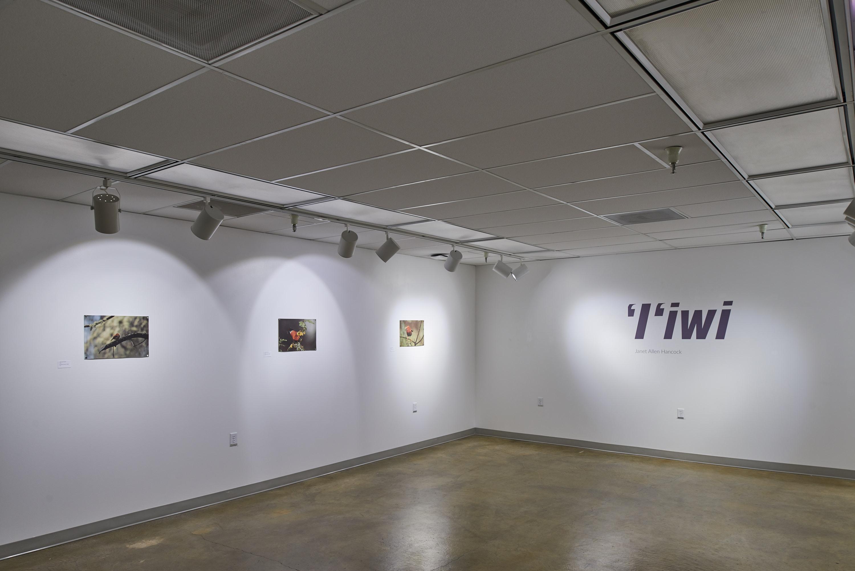 """Janet Hancock """"I'iwi"""" Exhibition"""